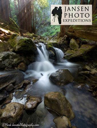 Redwood forests in Big Sur