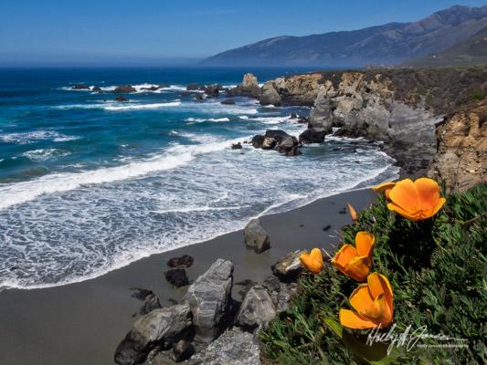 Big Sur Spring Photography Workshop
