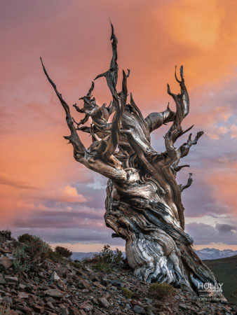 Photography workshop in the Ancient Bristlecone Forest