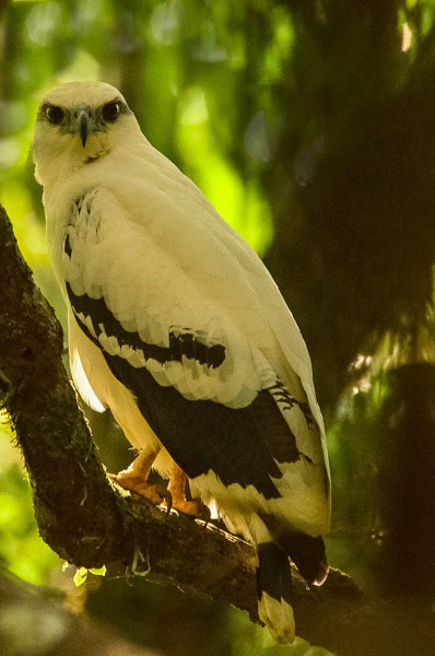 Costa Rica Bird Photography Workshop