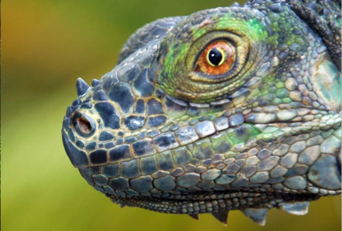 Costa Rica Photography Workshop with Jansen Photo Expeditions