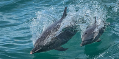 Costa Rica Dolphins on our Photography Workshop