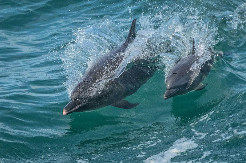 photographing Dolphins in Costa Rica