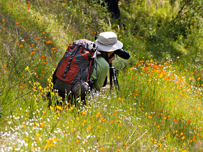 Holly Jansen of Jansen Photo Expeditions photographing wildflowers in Yosemite Valley