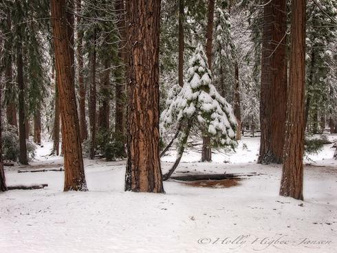 Yosemite winter photography Workshop l Jansen Photo Expeditions