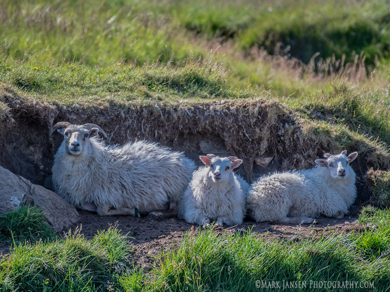 Westfjords Iceland Photography Workshop with Jansen Photo Expeditions