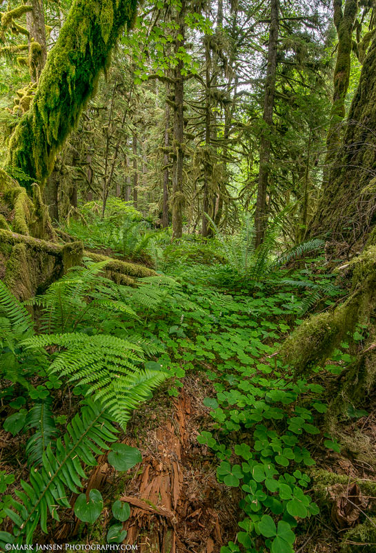 Oregon Old growth Forest Photography Workshop