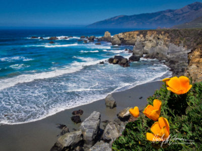 Wildflower photography in Big Sur