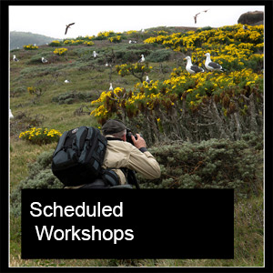 Scheduled photography Workshops