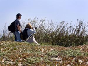 Ventura Birding Photography