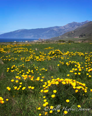 Wildflower photography workshops in Big Sur