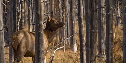 Best Lenses for wildlife photography