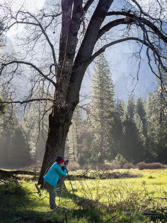 Yosemite Spring Photography