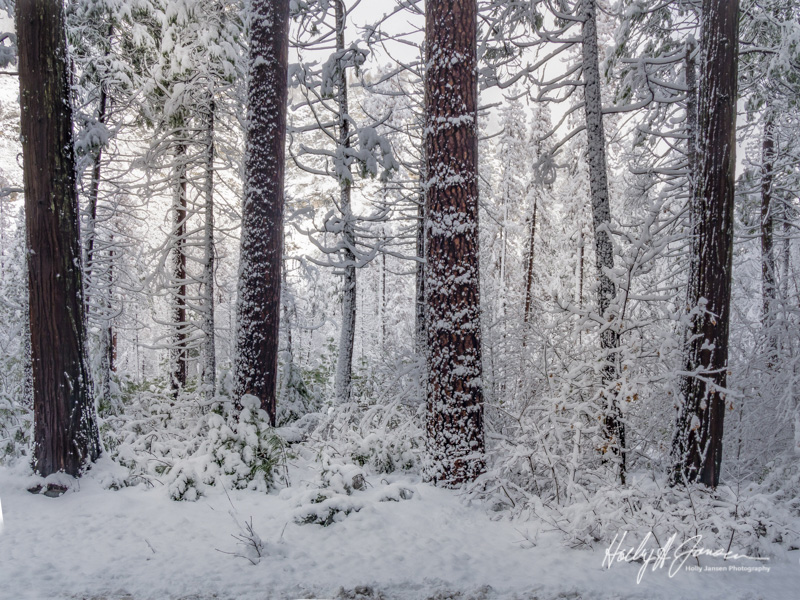 Yosemite winter photography workshop