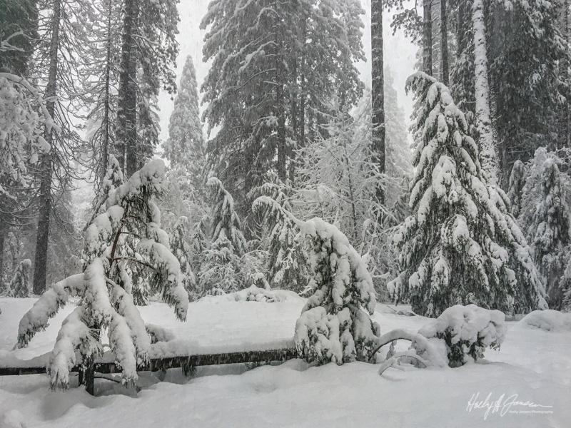 Yosemite winter photography workshop vista